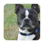 Classic Boston Terrier Dog Drink Coaster