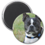 Classic Boston Terrier Dog Magnet