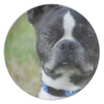 Classic Boston Terrier Dog Melamine Plate