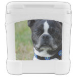 Classic Boston Terrier Dog Rolling Cooler