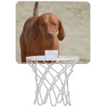 Coonhound Mini Basketball Backboard