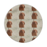 Coonhound Paper Plate