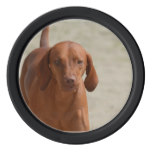 Coonhound Poker Chip Set