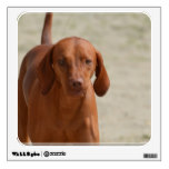 Coonhound Wall Decal