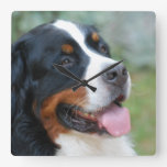 Cute Bernese Wall Clock