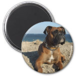 Cute Boxer Dog Magnet