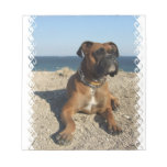 Cute Boxer Dog  Notepad