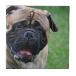 Cute Bullmastiff Tile