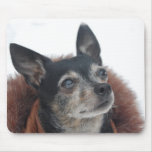 Cute Chihuahua Photos Mouse Pad