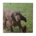 Cute Field Spaniel Ceramic Tile