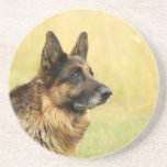Cute German Shepherd Coaster