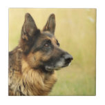 Cute German Shepherd Tile
