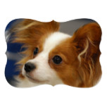 Cute Papillon Dog Card
