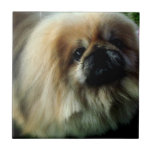 Cute Pekingese  Tile