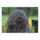 Cute Puli Dog Card
