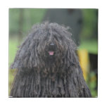 Cute Puli Dog Ceramic Tile