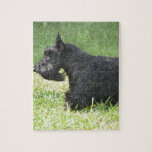 Cute Scottish Terrier Jigsaw Puzzle