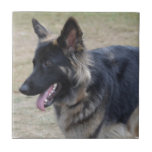 Cute Shiloh Shepherd Ceramic Tile