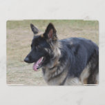 Cute Shiloh Shepherd Invitation