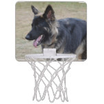 Cute Shiloh Shepherd Mini Basketball Backboard