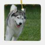 Cute Siberian Husky Ceramic Ornament