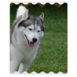 Cute Siberian Husky Plaque