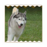 Cute Siberian Husky Wood Coaster