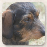 Cute Wire Haired Dashchund Drink Coaster
