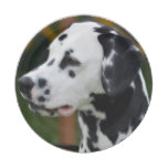 Dalmatian with Spots Paper Plate
