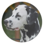 Dalmatian with Spots Plate