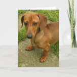 Daschund  Vertical Greeting Card