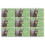 Doberman Pinscher Tissue Paper