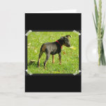 Doberman Puppies Greeting Card