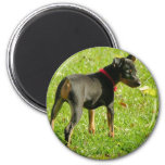 Doberman Puppies Round Magnet