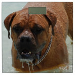 Drooling Bordeaux Mastiff Bathroom Scale