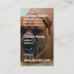Drooling Bordeaux Mastiff Business Card