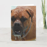 Drooling Bordeaux Mastiff Holiday Card