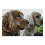 English Cocker Spaniel Dog Poster