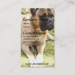 English Mastiff Dog Business Card