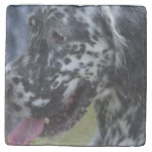 English Setter Up Close Stone Coaster
