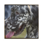 English Setter Up Close Wooden Coaster
