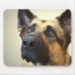 German Shepherd Picture Mouse Pad
