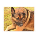 German Shepherd with One Floppy Ear Canvas Print