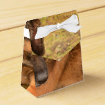 German Shepherd with One Floppy Ear Favor Box