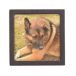 German Shepherd with One Floppy Ear Jewelry Box