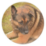 German Shepherd with One Floppy Ear Melamine Plate