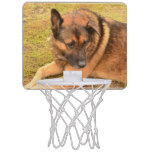 German Shepherd with One Floppy Ear Mini Basketball Hoop