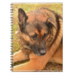 German Shepherd with One Floppy Ear Notebook