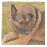 German Shepherd with One Floppy Ear Stone Coaster