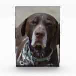 German Shorthaired Pointer Dog Acrylic Award